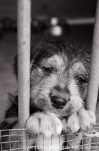 野良犬イメージ